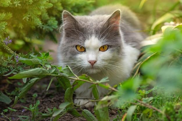 영국 상아탑에 틀어 박힌 고양이 야외 재미. 귀여운 짧은 머리 고양이의 초상화입니다.