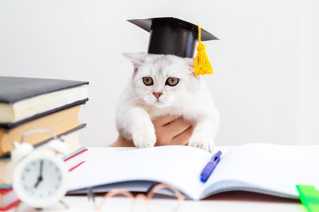 卒業式の帽子をかぶったブリティッシュショートヘアの猫が勉強しています。テーブルの上に学習用品があります。ユーモア。学校に戻る。学習と独学の概念。