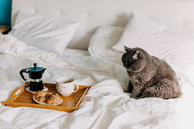 British shorthair cat sitting on bed next to a wooden tray with croissants and cup of coffee