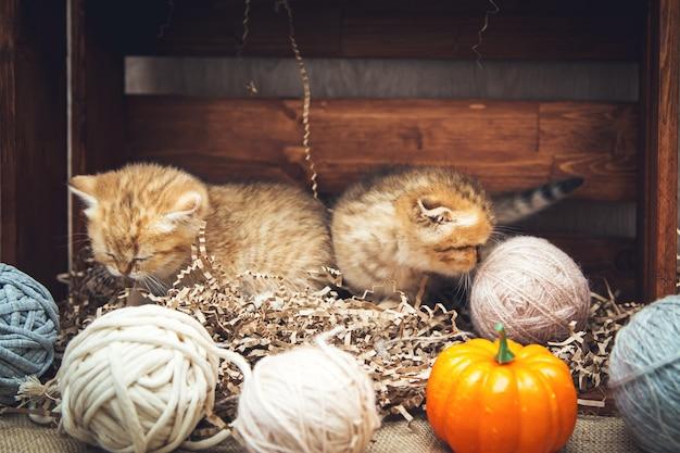 Котята британской короткошерстной породы играют с клубками ниток в деревянном ящике. деревенский стиль.