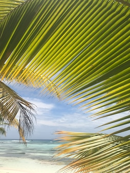 Broad palm leaves raise up to the skies