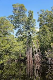 Широкая река недалеко от блэк-ривер на ямайке, экзотический пейзаж в мангровых зарослях