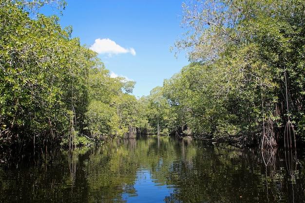ジャマイカのブラック リバーに近い広い川、マングローブのエキゾチックな風景