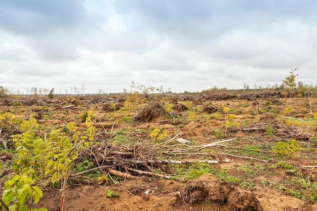 森の最後のハリケーンの後、白樺の木の土地から壊れて引き抜かれました。今年の春の写真のクローズアップの森。空に灰色の雲と曇りの天気