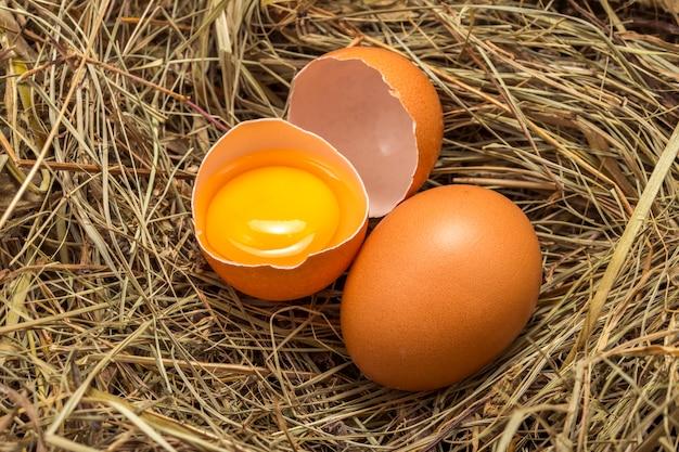乾いた草の上の卵黄と卵黄