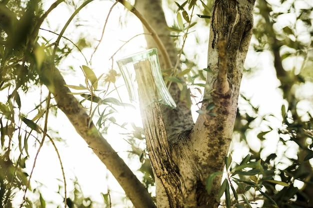 Broken glass hanging on tree branch in sunlight