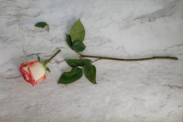 흰색 대리석 테이블에 깨진 장미 heartbreak 개념