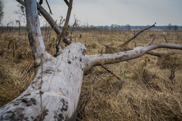 Broken tree branches