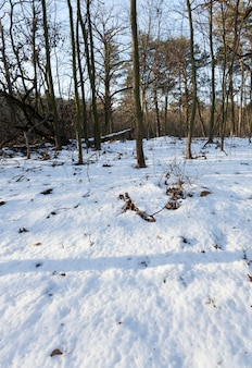겨울철 숲에서 부러진 나무. 강설 후 식물과 땅은 순수한 눈으로 덮여 있습니다. 겨울 풍경
