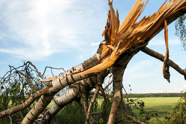 Broken trunk of a birch tree in stormy weather, made's photos close-up, blue sky in the background