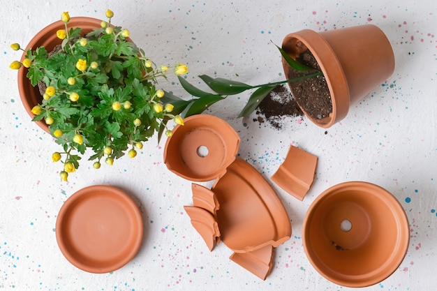 Broken and whole flower pots