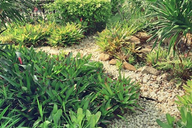 Bromeliad flower for decoration