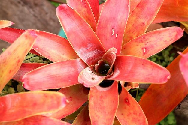 Bromeliad flower in tropical