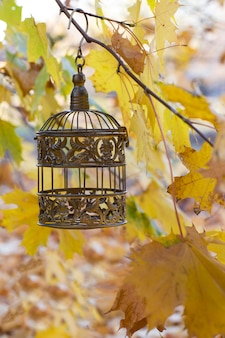 A bronze old cage hangs on a branch of yellow maple leaves