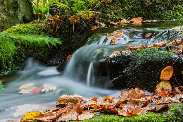 落ち葉のある秋の小川。コケが生い茂った小川の土手。