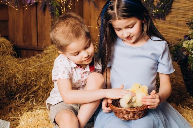 농장의 형제 자매는 웃고 닭을 봅니다. 프리미엄 사진