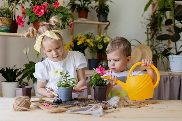 兄と妹は黄色いじょうろから屋内の花を植えて移植し、水をやります