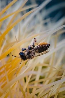 갈색과 검은 색 꿀벌