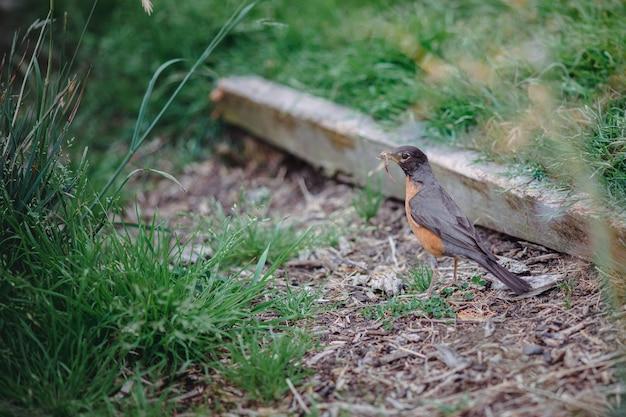 Коричневая и черная птица на зеленой траве в дневное время