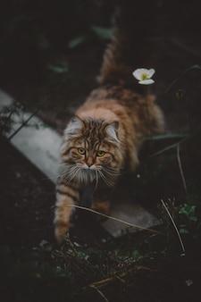 緑の芝生の上に立っている茶色と黒猫