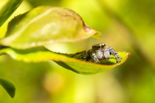 녹색 잎에 갈색과 검은 색 곤충