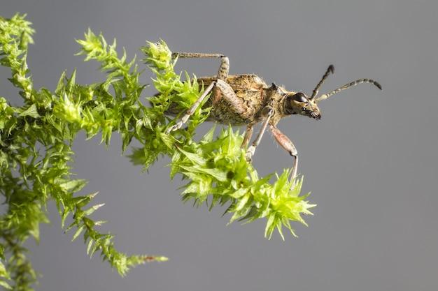 緑の植物に茶色と黒の昆虫