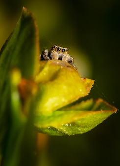緑の葉に茶色と黒のクモ