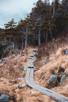 Коричневый и серый бетонный путь между коричневой травой и деревьями в дневное время