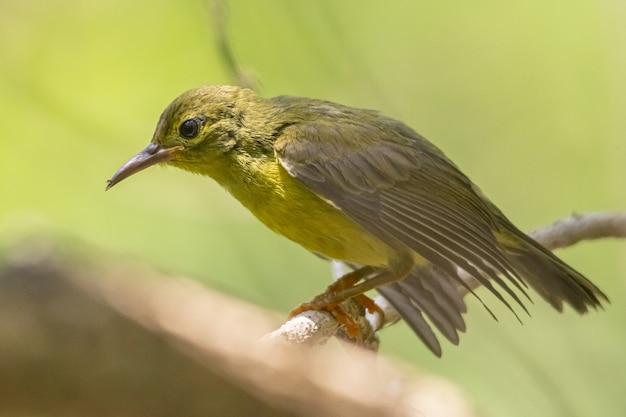 Коричневая и зеленая птица на ветке дерева