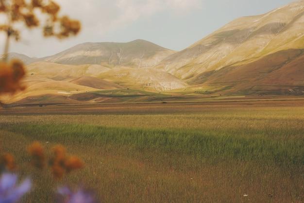 山の近くの茶色と緑のフィールド