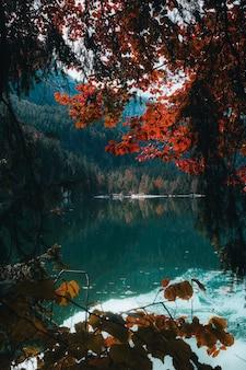 낮 동안 강 옆에 갈색과 녹색 나무