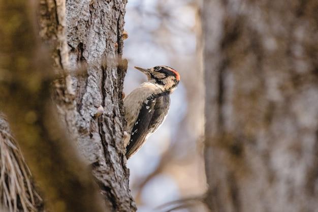낮 동안 갈색 나뭇 가지에 갈색과 흰색 새