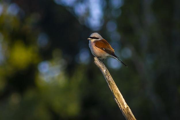 茶色の木の枝に茶色と白の鳥