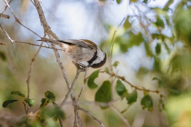 낮 동안 나뭇 가지에 갈색과 흰색 새