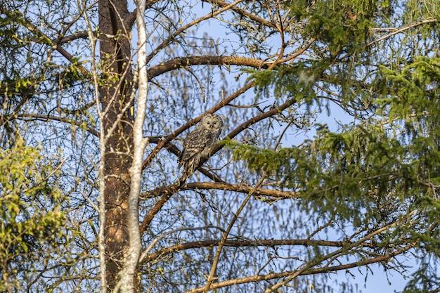 나뭇 가지에 갈색과 흰색 올빼미