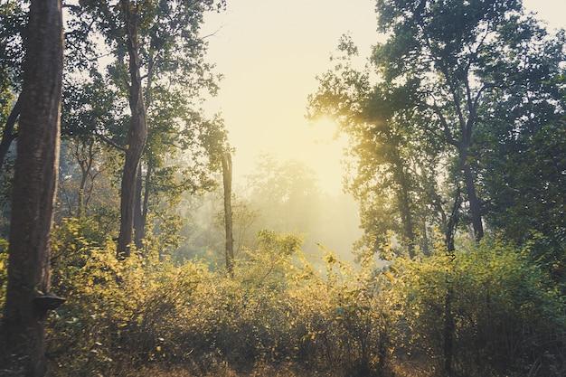 봄 맑은 날 하늘 빛 숲 언덕 배경에 덤불과 갈색과 노란색 잔디 필드.