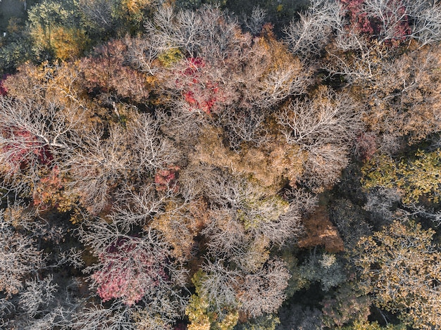 Brown autumn forest aerial drone view. earth day, environment protection.