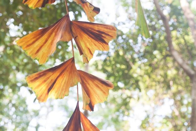 Brown back soft scene deciduous lush