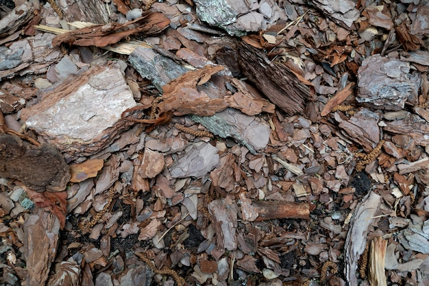 Brown background of pieces of wood bark and wood chips