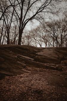 昼間の茶色の地面に茶色の裸木