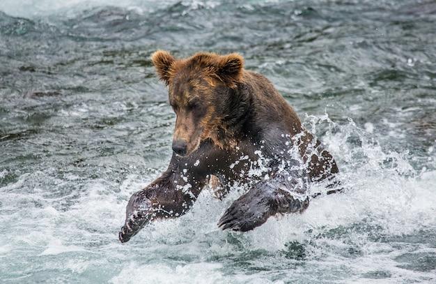 ヒグマは湖で泳いでいます