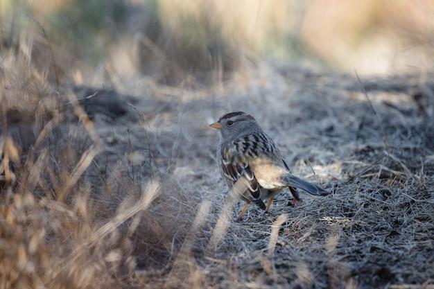 Uccello marrone sull'erba marrone durante il giorno