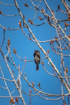 낮 동안 갈색 나뭇 가지에 갈색 새