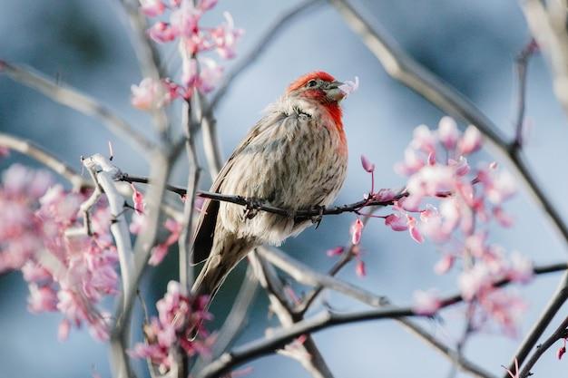 ピンクの花に茶色の鳥