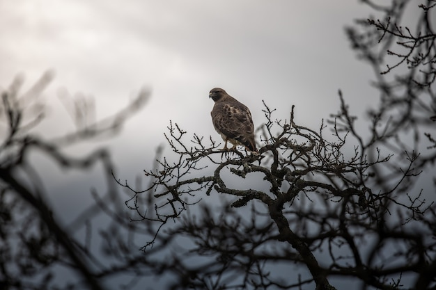 昼間の木の枝に茶色の鳥