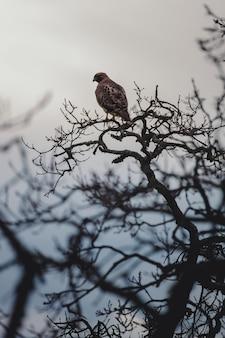 낮 동안 나뭇 가지에 갈색 새