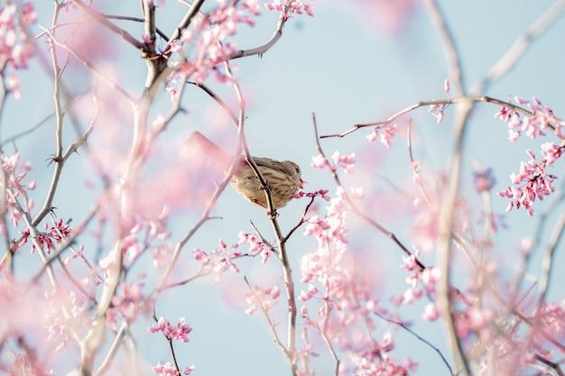 ピンクの花にとまる茶色の鳥