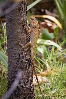 Lucertola marrone e nera sul ramo di un albero marrone