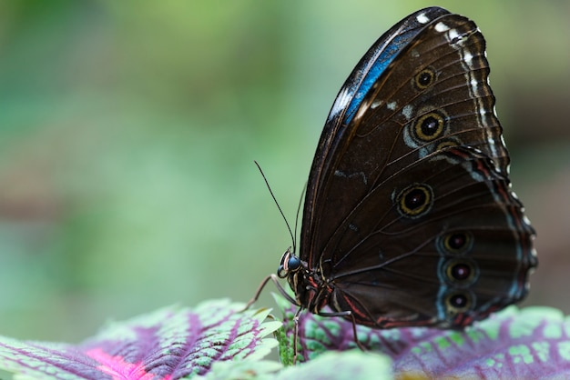 Brown and blue butterfly on colorful leaves