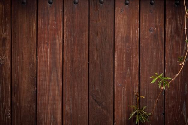 갈색 보드 울타리와 포도 덩굴입니다. 빈티지 디자인을 위한 천연 나무 배경입니다. 붉은 갈색 나무 판자 배경에 녹색 산악인 덩굴 식물.